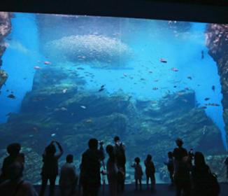 三陸の海を巨大水槽で再現…仙台に新水族館