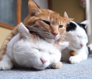 """猫on猫、いろんな""""ねこ重""""に癒される(動画集)"""