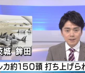 【速報】イルカ約150頭打ち上げられる 茨城