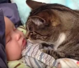 可愛すぎるニャンコがすやすや眠る赤ちゃんをじっと優しく見守る
