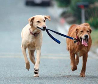 二匹の犬が示した「友情」