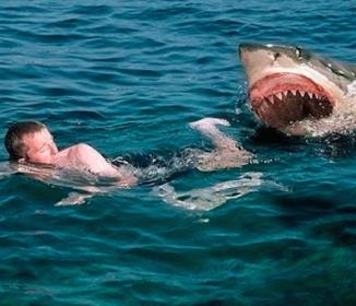 <サメ>サーファー「足首かまれた。背びれ見えた」