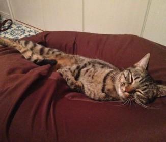 人をダメにするソファ、人よりも先に猫をダメにする「もうここから動けないニャ♪」