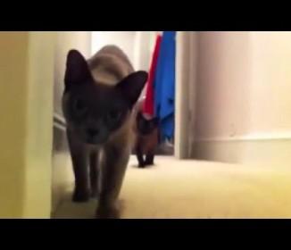 後半に注目! 油断してると怖い(笑) ネコとダルマさんが転んだで遊んでると・・・
