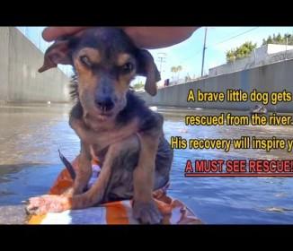 足を切断され10mもの高さから水路に投げ捨てられた子犬…奇跡的な回復に涙
