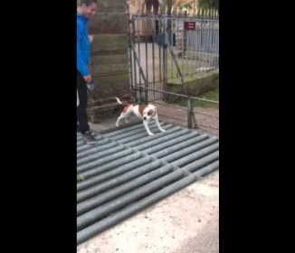 【爆笑】渡るのが怖い「難所」に出くわした犬が考えた「秘策」wwwwwwww
