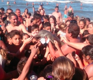 ひどい!イルカの赤ちゃん、観光客が寄ってたかって自撮りしたため命を落とす