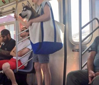 大型犬を連れて電車に乗るとき、ニューヨーカーたちはこうする(笑)