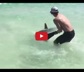 暴れるサメを無理やり浅瀬に引っ張ってゆく男性。イタズラしてるのかと思いきや!?
