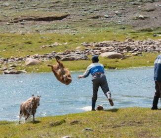 マジか!カザフ人が「羊を丸洗いする方法」がワイルドすぎる(笑)