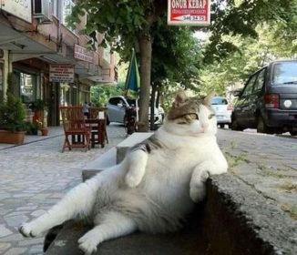 オッサンか!独特のポーズでくつろぐあの猫が銅像として蘇る