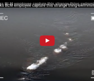 シーサーペントなのか!?アラスカで細長く巨大な謎生物が川を泳いでいるところを目撃される