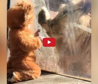 赤ちゃんとライオン、互いに意思疎通!?
