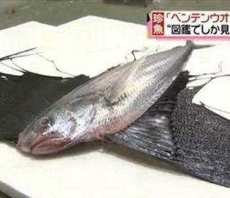 韓国人「放射能の影響か?」日本で獲れた珍しい魚、韓国ネットで話題!