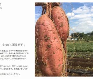 「さつまいもが10トン余っています」→あっという間に注文締切 Twitterで予想外な展開を迎えた神田大浦農場に話を聞いてみた