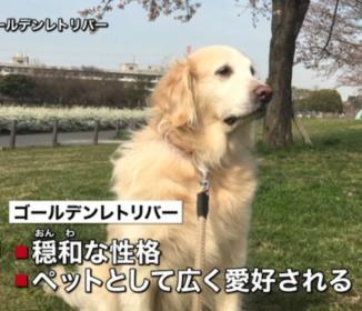 飼っていた大型犬に噛まれ10か月女児死亡!